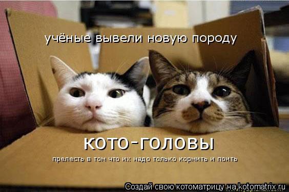 Котоматрица: учёные вывели новую породу кото-головы прелесть в том что их надо только кормить и поить