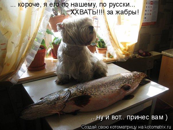 Котоматрица: ... короче, я его по нашему, по русски...  ХХВАТЬ!!!! за жабры! .. ну и вот.. принес вам )