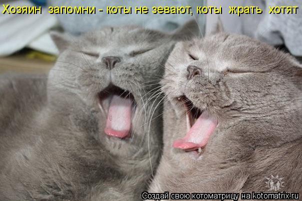 Котоматрица: Хозяин  запомни - коты не зевают, коты  жрать  хотят !