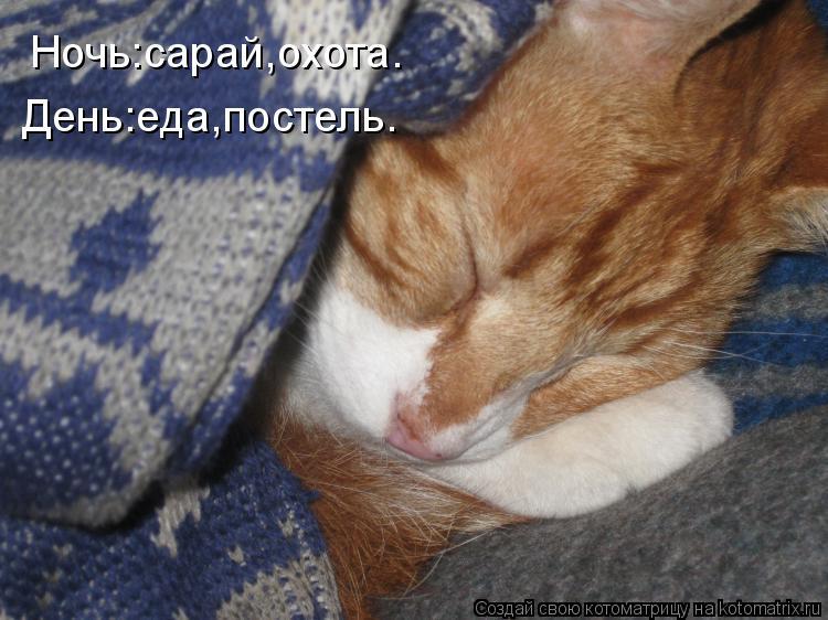 Котоматрица: Ночь:сарай,охота. День:еда,постель.