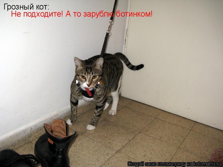 Котоматрица: Грозный кот: Не подходите! А то зарублю ботинком!