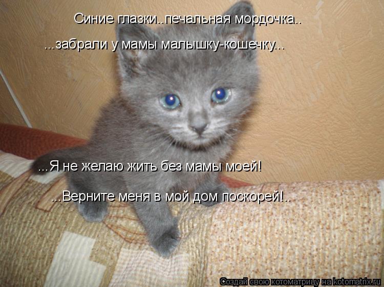 Котоматрица: Синие глазки..печальная мордочка.. ...забрали у мамы малышку-кошечку... ...Я не желаю жить без мамы моей! ...Верните меня в мой дом поскорей!..