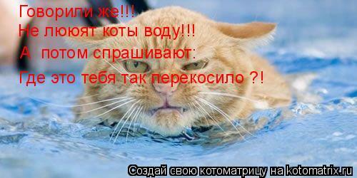 Котоматрица: Говорили же!!! Не лююят коты воду!!! А  потом спрашивают: Где это тебя так перекосило ?!
