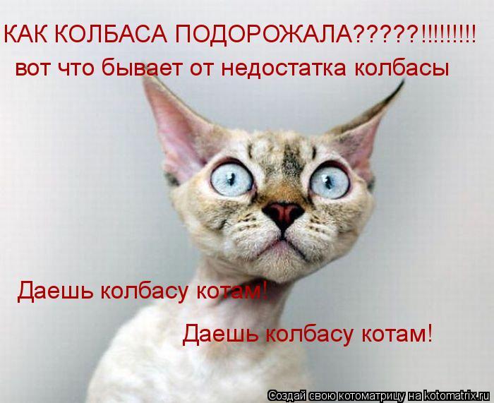 Котоматрица: КАК КОЛБАСА ПОДОРОЖАЛА?????!!!!!!!!! вот что бывает от недостатка колбасы Даешь колбасу котам!  Даешь колбасу котам!