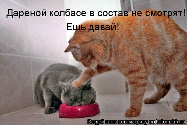 Котоматрица: Дареной колбасе в состав не смотрят! Ешь давай!