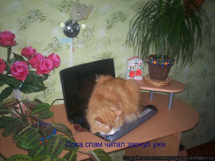 Котоматрица: Пока спам читал заснул уже