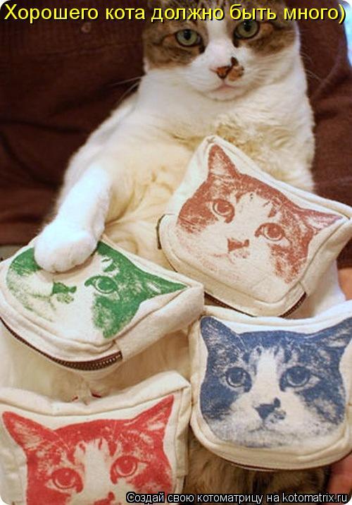 Котоматрица: Хорошего кота должно быть много)