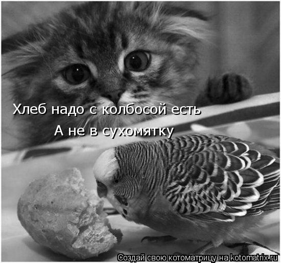 Котоматрица: Хлеб надо с колбосой есть Хлеб надо с колбосой есть А не в сухомятку