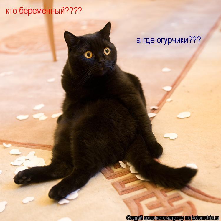 Котоматрица: кто беременный???? а где огурчики???