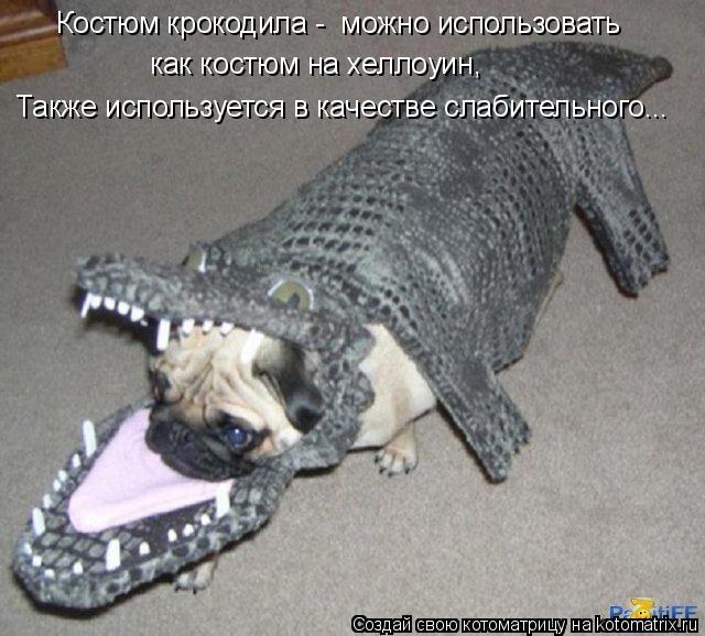 Котоматрица: Костюм крокодила -  можно использовать  как костюм на хеллоуин, Также используется в качестве слабительного...