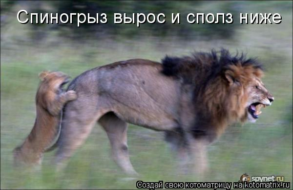 Котоматриця!)))) - Страница 5 724104