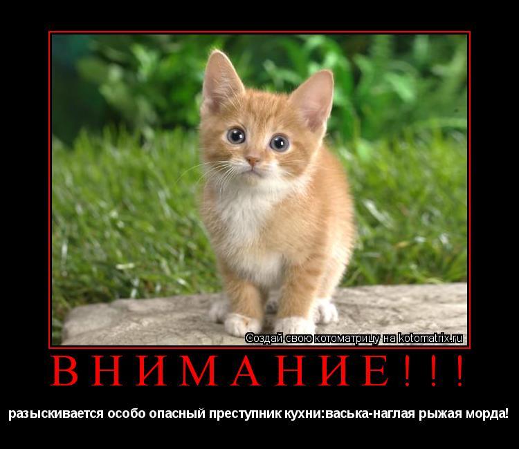 Котоматрица: Внимание!!! разыскивается особо опасный преступник кухни:васька-наглая рыжая морда!
