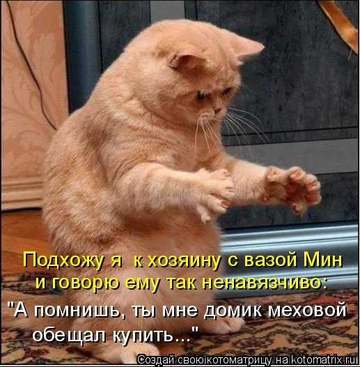 """Котоматрица: Подхожу я  к хозяину с вазой Мин и говорю ему так ненавязчиво:  """"А помнишь, ты мне домик меховой  обещал купить..."""""""
