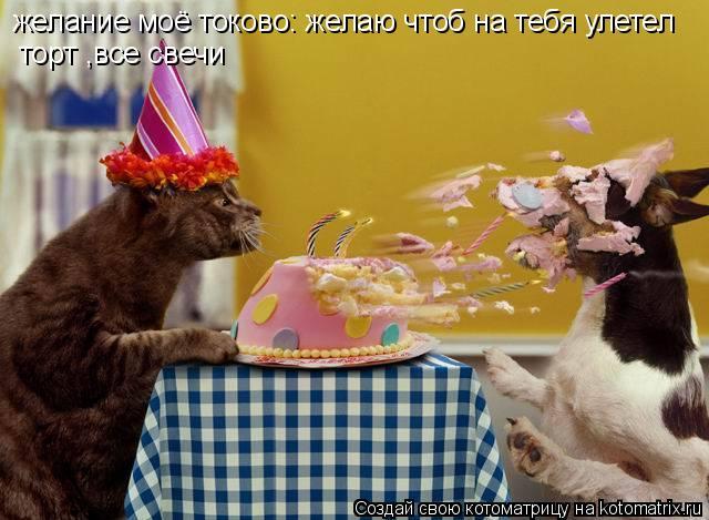 Котоматрица: желание моё токово: желаю чтоб на тебя улетел  торт ,все свечи