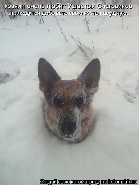 Котоматрица: хозяин очень любит Ушастых Снеговиков ..приходится добывать свою кость насущную..