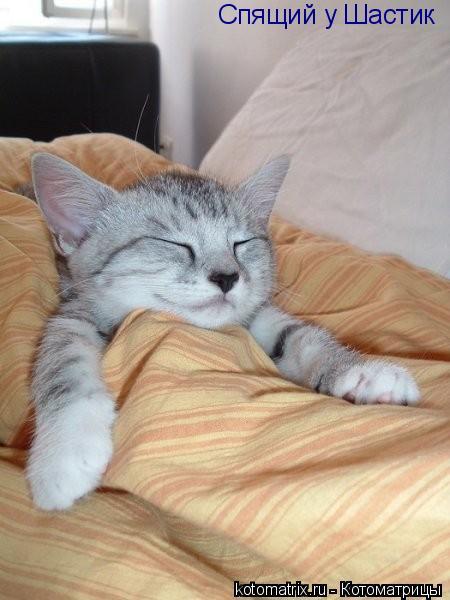 Котоматрица: Спящий у Шастик