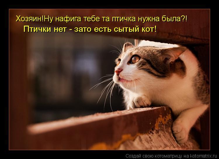 Котоматрица: Хозяин!Ну нафига тебе та птичка нужна была?! Птички нет - зато есть сытый кот! Хозяин!Ну нафига тебе та птичка нужна была?! Птички нет - зато ес