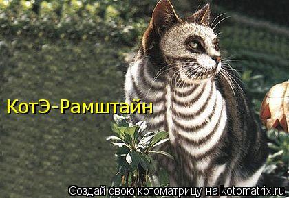 Котоматрица: КотЭ-Рамштайн