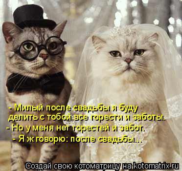 Котоматрица: - Милый после свадьбы я буду  делить с тобой все горести и заботы.   - Но у меня нет горестей и забот.   - Я ж говорю: после свадьбы...