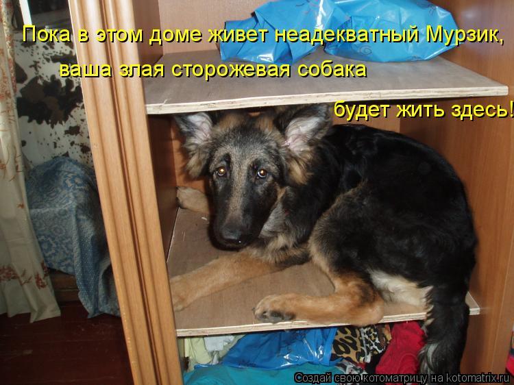 Котоматрица: Пока в этом доме живет неадекватный Мурзик, ваша злая сторожевая собака будет жить здесь!