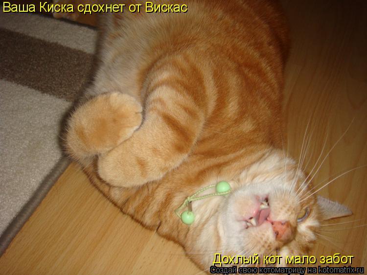 Котоматрица: Ваша Киска сдохнет от Вискас Дохлый кот мало забот