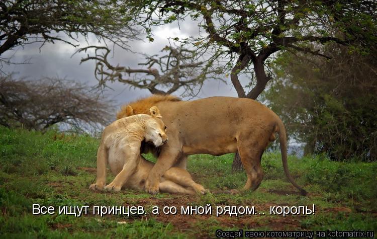 Котоматрица: Все ищут принцев, а со мной рядом... король!