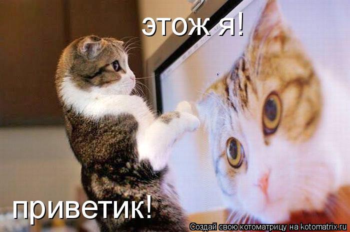 Котоматрица: этож я! приветик!
