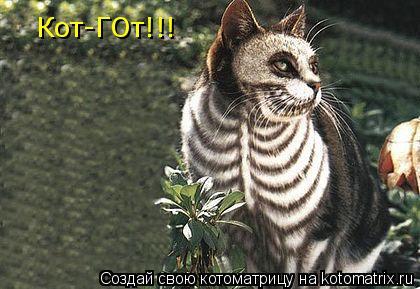 Котоматрица: Кот-ГОт!!!