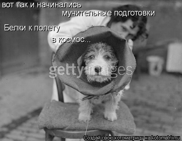 Котоматрица: вот так и начинались вот так и начинались мучительные подготовки Белки к полету в космос...