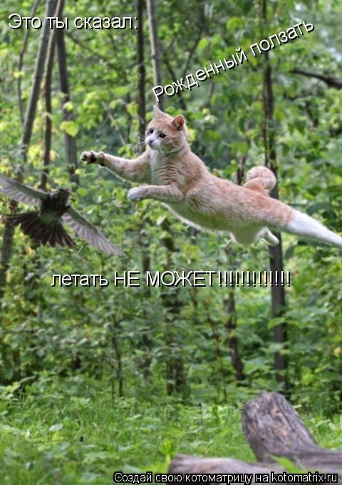 Котоматрица: Это ты сказал: Рожденный ползать летать НЕ МОЖЕТ!!!!!!!!!!!!!