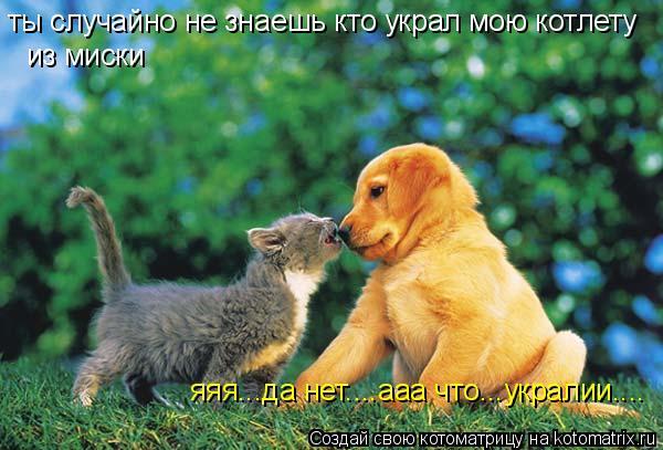 Котоматрица: ты случайно не знаешь кто украл мою котлету  из миски   яяя...да нет....ааа что...укралии....