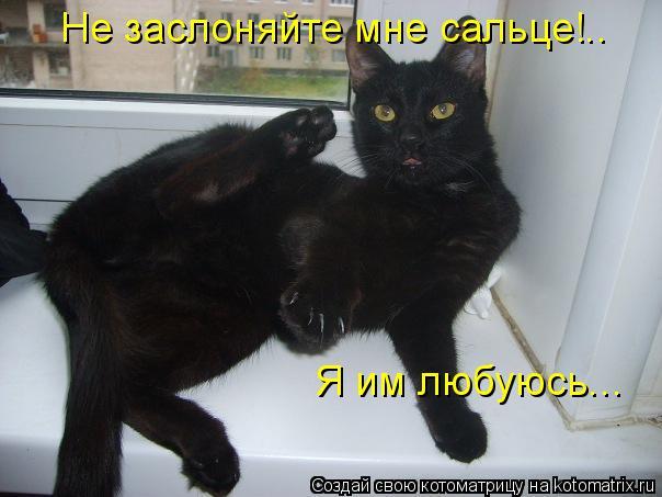 Котоматрица: Не заслоняйте мне сальце!.. Я им любуюсь...