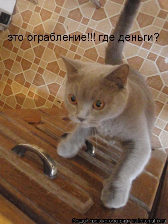 Котоматрица: это ограбление!!! где деньги?