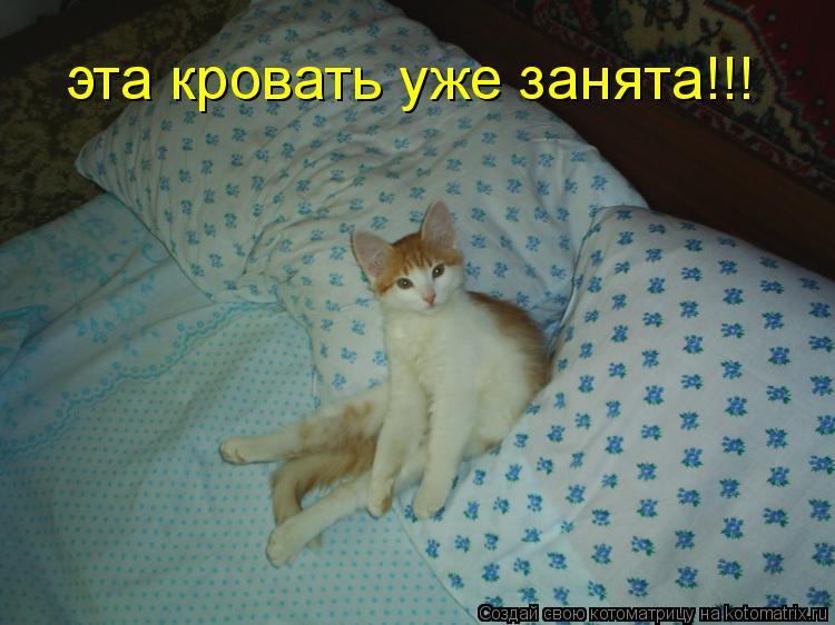 Котоматрица: эта кровать уже занята!!!