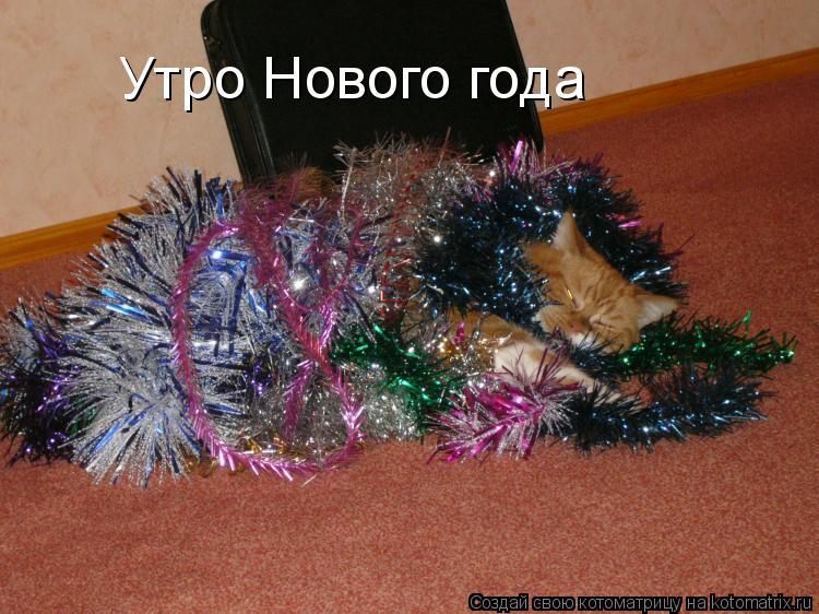 Котоматрица: Утро Нового года