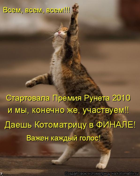 Котоматрица: Всем, всем, всем!!! Стартовала Премия Рунета 2010 и мы, конечно же, участвуем!! Даешь Котоматрицу в ФИНАЛЕ! Важен каждый голос!