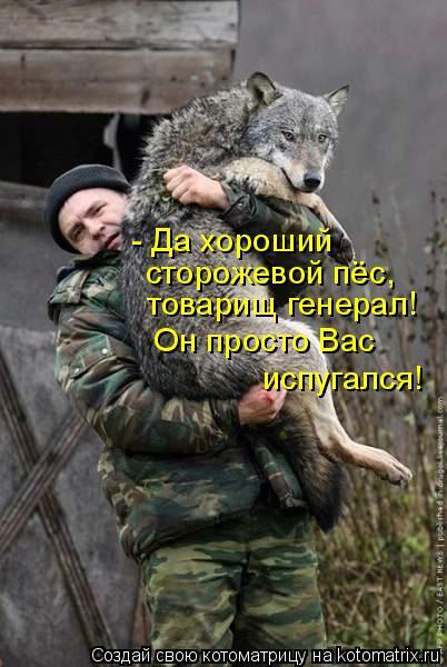 Котоматрица: - Да хороший  сторожевой пёс,  товарищ генерал! Он просто Вас  испугался!