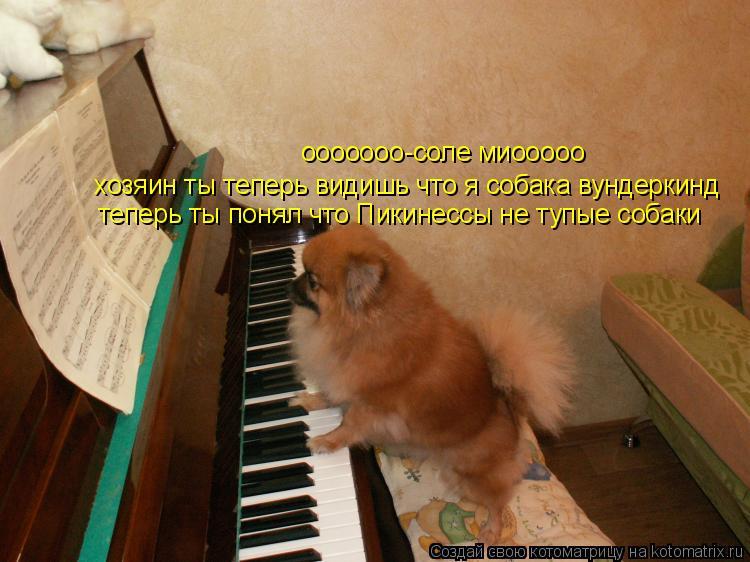 Котоматрица: ооооооо-соле миооооо хозяин ты теперь видишь что я собака вундеркинд теперь ты понял что Пикинессы не тупые собаки