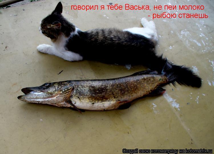 Котоматрица: говорил я тебе Васька, не пеи молоко  - рыбою станешь