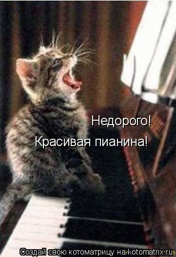 Котоматрица: Недорого! Красивая пианина!
