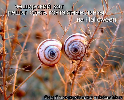 Котоматрица: чеширский кот решил одеть контактные линзы на Halloween