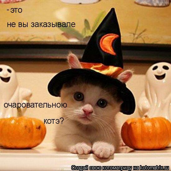 Котоматрица: это не вы заказывале очаровательною котэ? -