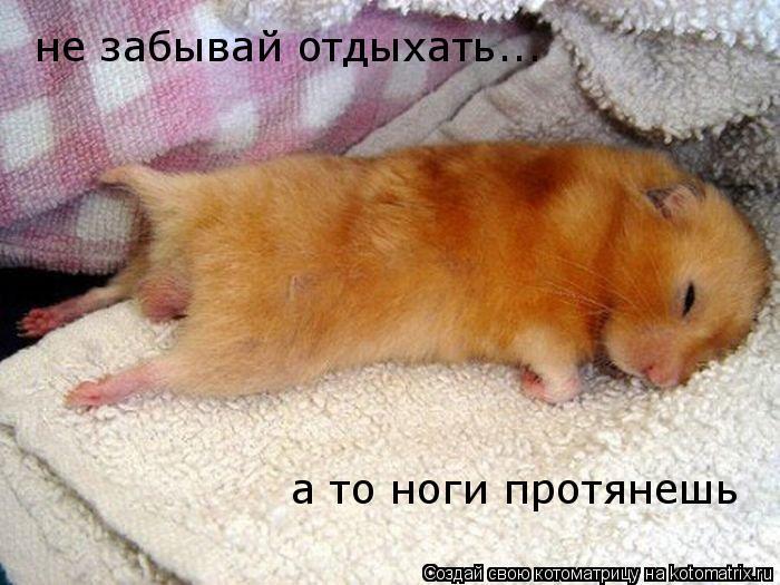 Котоматрица: не забывай отдыхать... а то ноги протянешь