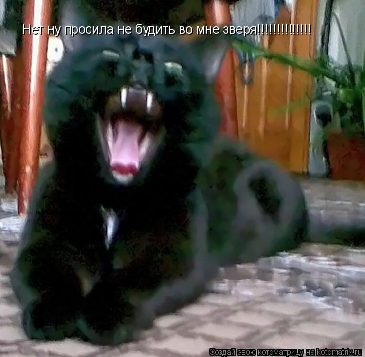 Котоматрица: Нет ну просила не будить во мне зверя!!!!!!!!!!!!!!