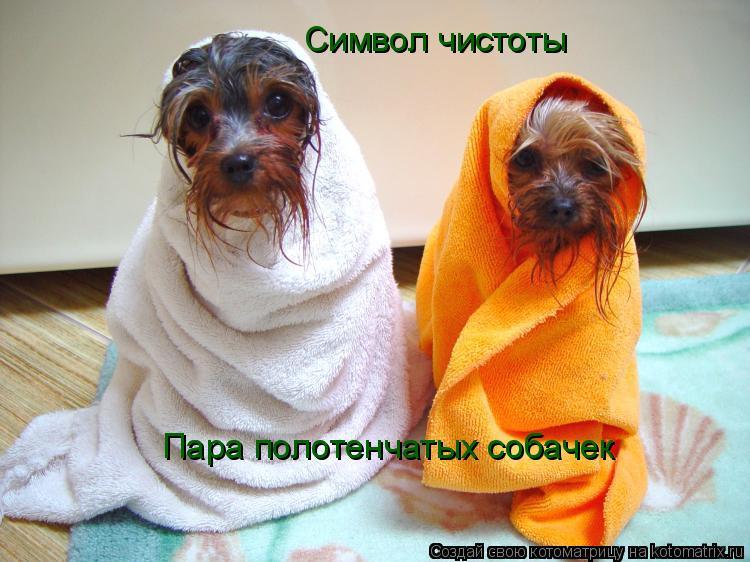Котоматрица: Символ чистоты Пара полотенчатых собачек