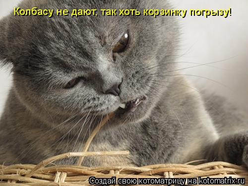 Котоматрица: Колбасу не дают, так хоть корзинку погрызу!