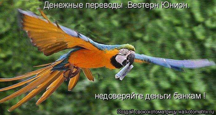 """Котоматрица: Денежные переводы """"Вестерн Юнион"""" недоверяйте деньги банкам !"""