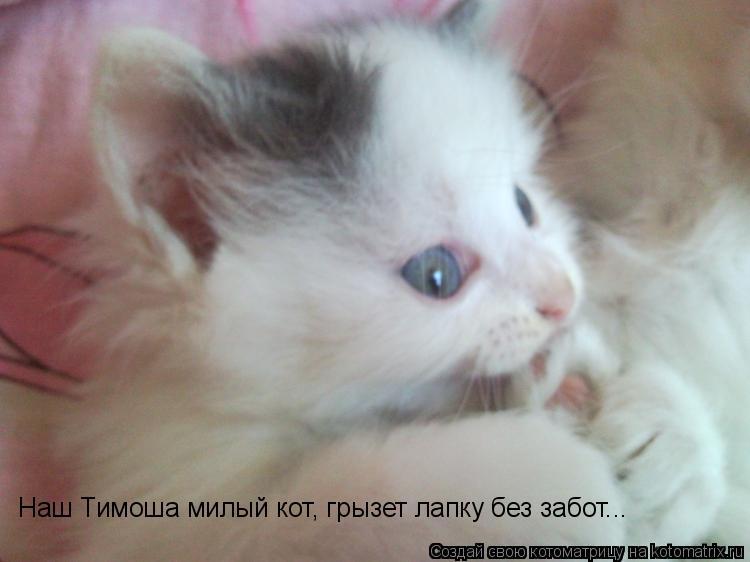 Котоматрица: Наш Тимоша милый кот, грызет лапку без забот...