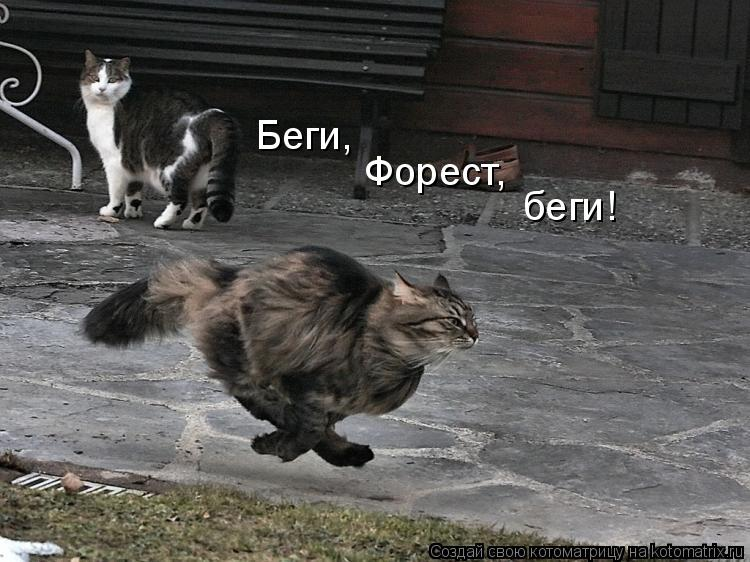Котоматрица: Беги, Форест, беги!