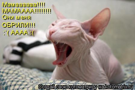 Котоматрица: Мамаааааа!!!! МАМАААА!!!!!!!! Они меня ОБРИЛИ!!! :`( АААА :(
